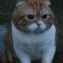 Кот на вязку бесплатно, в Тольятти