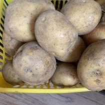 Картофель, в Радужном