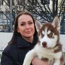 ПРОДАЮТСЯ КЛУБНЫЕ ЩЕНКИ ШОУ КЛАССА СИБИРСКИЙ ХАСКИ, в Москве