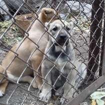 Собаки щенки, в г.Горловка