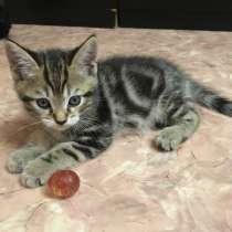 Продам котят, в Томске