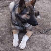 Собака Дина, 1 год, в Новосибирске