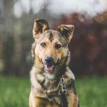 Нита веселая собачка ищет дом, в Москве