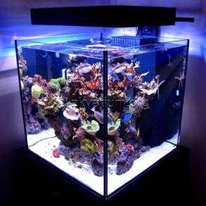 Изготовление морского аквариума на заказ в Ялте, в Ялте