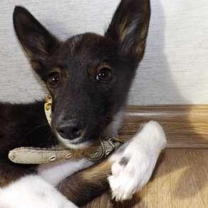 Смышленый щенок, в Ангарске