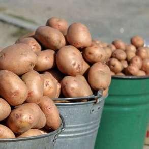 Продукты питания со своего огорода, в Волоколамске