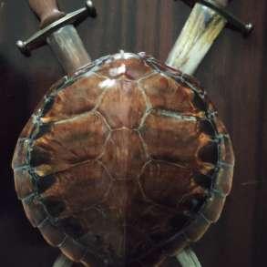 Эксклюзивный сувенир из Атлантического океана, в г.Алматы