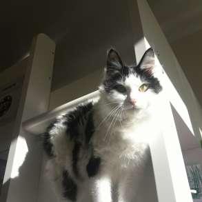 Продам котенка, в Москве