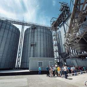 Продам семена пшеницы, заводской подготовки, в г.Харьков