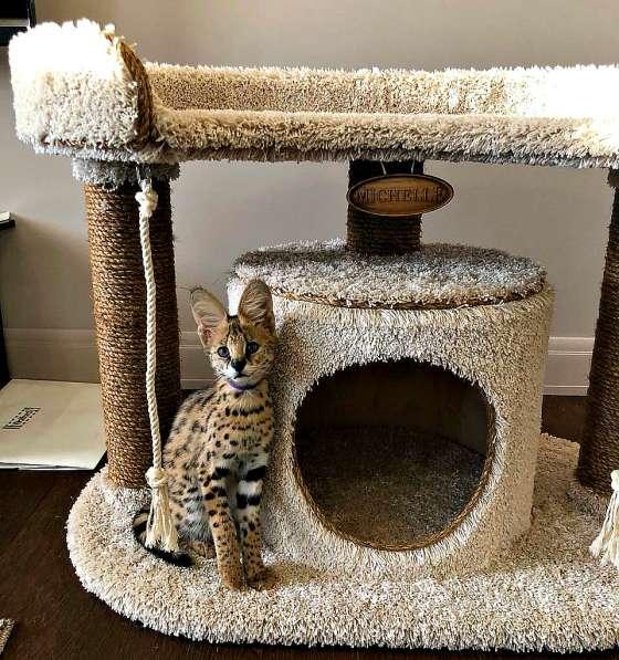 Изготовление комплексов и домиков для кошек на заказ в Ростове-на-Дону фото 11
