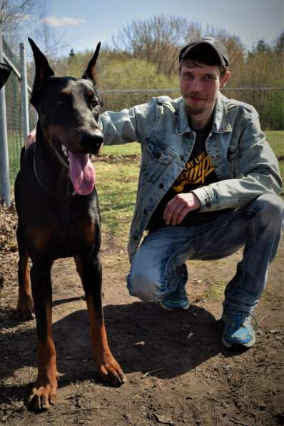 Передержка и дрессировка собак в Раменское фото 11