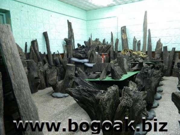 Мореный дуб(Bog Oak)