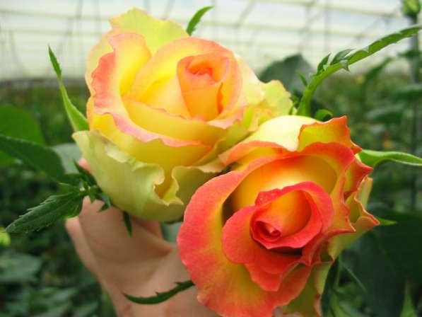 Цветы напрямую от плантаций Эквадора от 1 коробки