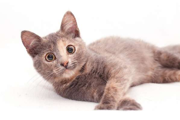 Котенок Нала в добрые руки, 4 мес