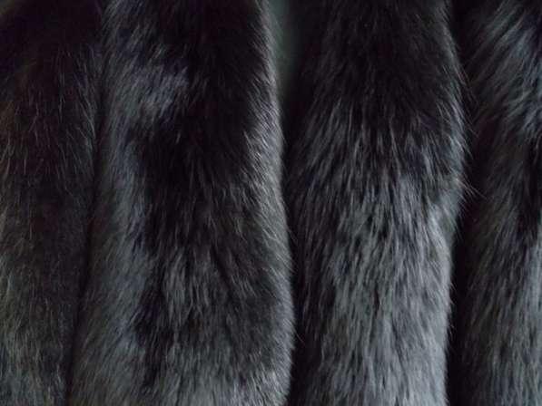 Шкурки лисы черной