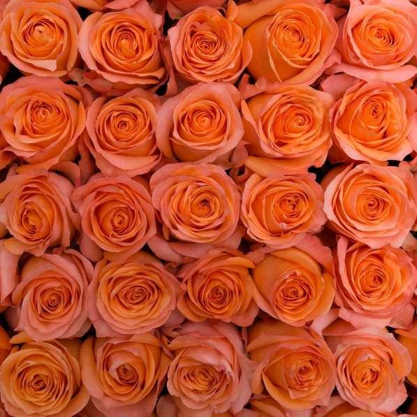 Цветы напрямую от плантаций Эквадора от 1 коробки в Москве фото 4
