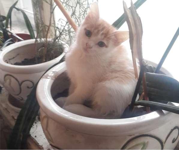 Отдам ласкового, доброго, бело-рыжего, 2-х месячного котика