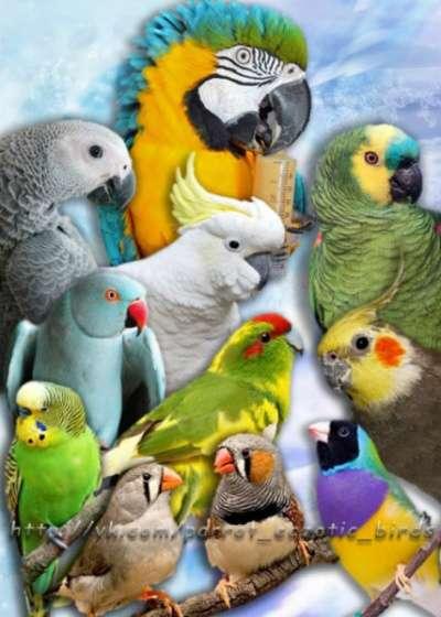 Приму в дар попугаев