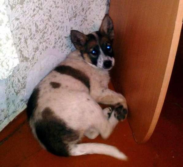 Отдам щенка девочку 6 мес в Красноярске