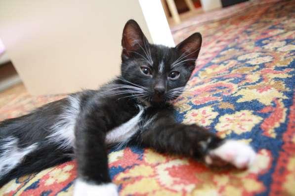 Котенок / котята 2 шт / черный