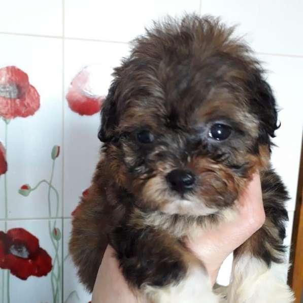 Продажа щенков в Казани фото 4