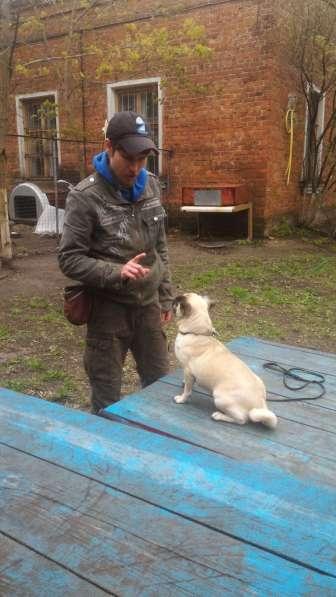 Передержка и дрессировка собак в Раменское фото 4