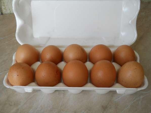 Яйцо домашнее (10 шт)