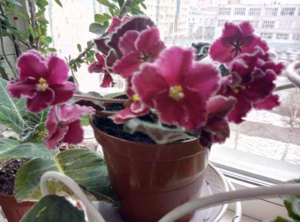 Растения для дома и офиса в Новосибирске фото 4