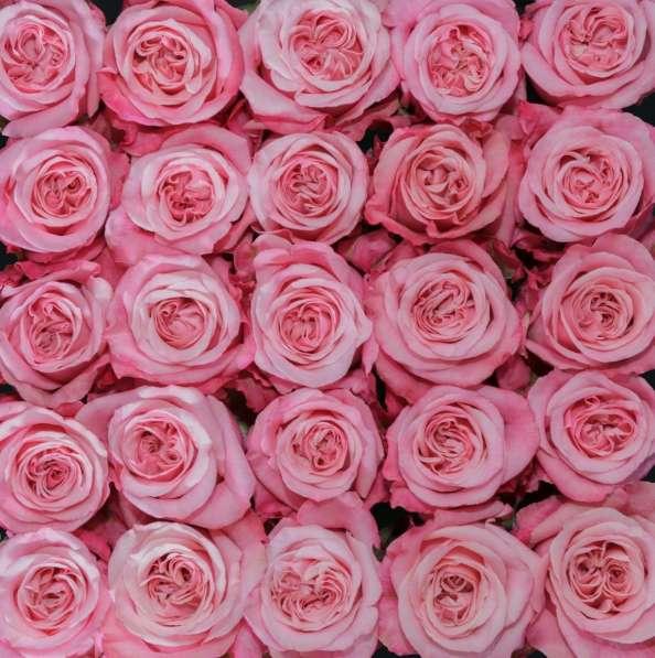 Цветы напрямую от плантаций Эквадора от 1 коробки в Москве фото 11