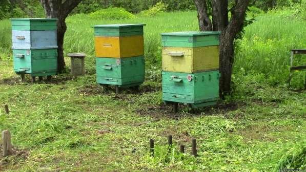 Приму в дар пчёл в Ногинске фото 4
