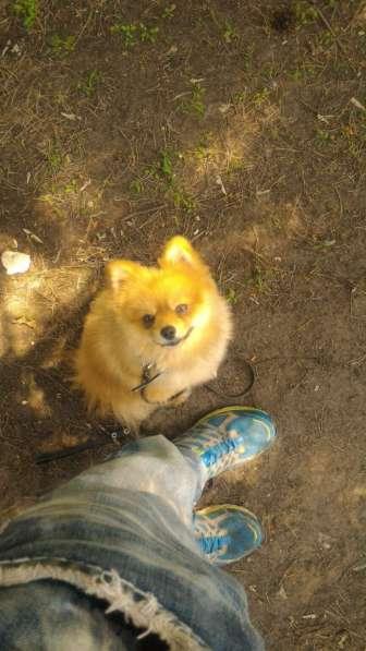 Передержка и дрессировка собак в Раменское фото 9