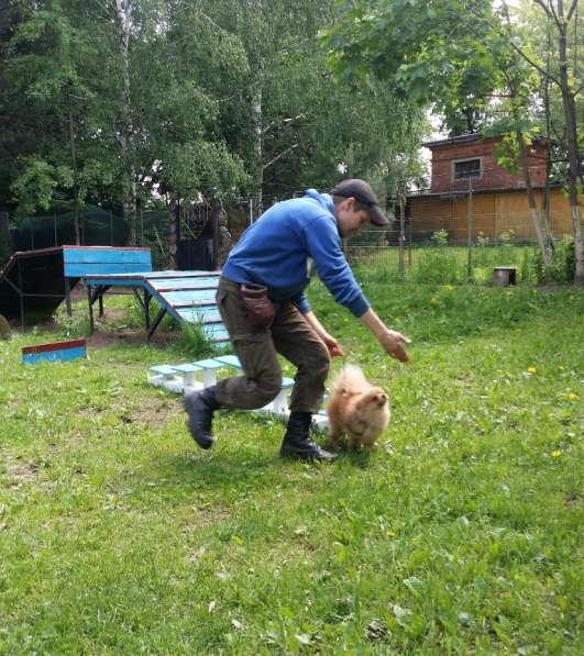 Передержка и дрессировка собак в Раменское фото 8