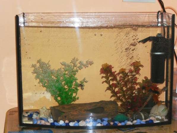 Аквариум с рыбками в Асбесте