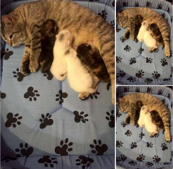 Мама-кошка с малышами