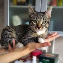 Котенок Тимоша, милейший ласковый мальчик в дар, в г.Москва