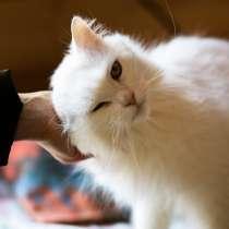 Белый, пушистый и очень ласковый кот, в г.Санкт-Петербург