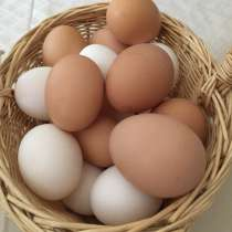 Домашнее яйцо. Мясо-бройлера домашнее, в Казани