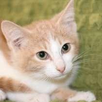 Маленький котенок Портос, рыжий позитив в дар, в г.Москва