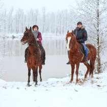 """Подарок-впечатление от конного клуба """"Центавр"""", в Нижнем Новгороде"""