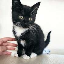 Очень красивые котята, мальчик и девочки в добрые руки, в г.Санкт-Петербург