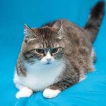 Отдам даром Уютная, ласковая, любящая кошка Машенька, в г.Москва