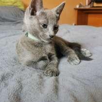 Котёнок Шерлок (др 13.03.2021), в г.Франкфурт-на-Майне