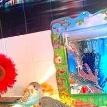 Волнистые попугаи-От Заводчика, в Мытищи