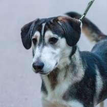 Собаке очень нужен дом, в Нижнем Новгороде