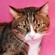 Молоденький котик Елисейка ищет дом, в г.Москва