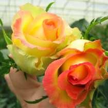 Цветы напрямую от плантаций Эквадора от 1 коробки, в Москве