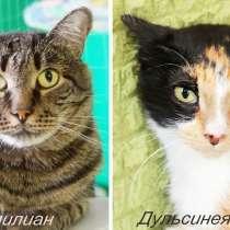 Кошки-бояки из приюта. Маленький шанс обрести дом, в Москве