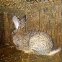 Кролики на племя. Мясо кролика. Пельмени. Котлеты, в Барнауле