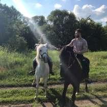 Прогулки на лошадях, в Воронеже