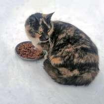 Милая трогательная черепаховая кошечка Ириска ищет дом, в г.Москва